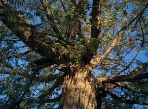 מבט על העץ המשפחתי